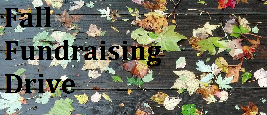 Fall_funraising_header_2013